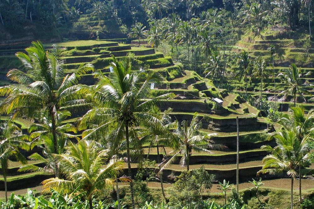 Unterwegs auf Bali